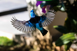 aves-casa-dos-arautos-casa-nossa-senhora-da-divina-providencia-passa-azul-natureza