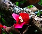 arautos-divina-providencia-5dls8706